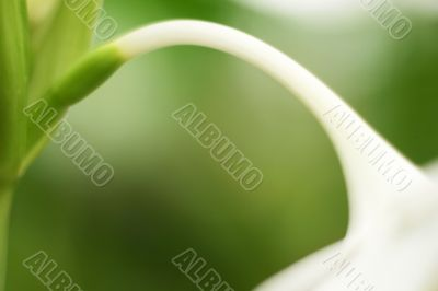 White stem