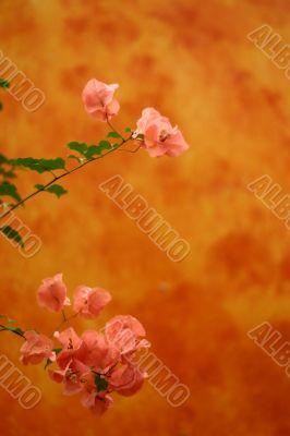 Orange flowery background