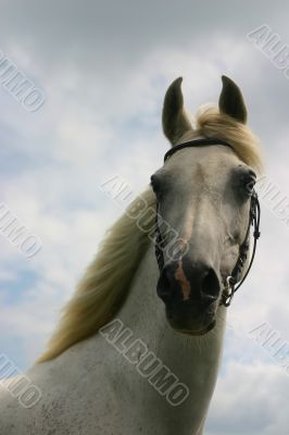 Cloudy sky, white arabian