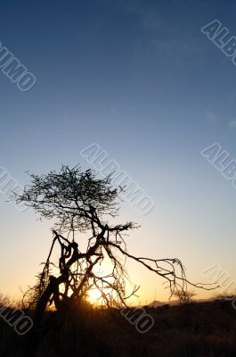 Tree silhouette in sunset