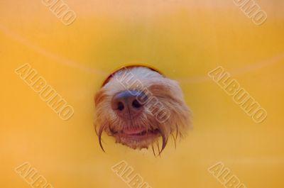 dog nose poking through hole