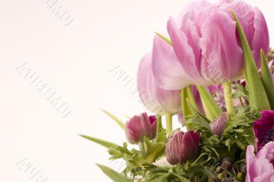 Tulip, Anemone, Lilac & Berries