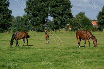 Foal in between.