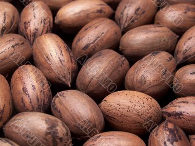 Whole Pecans In The Shell