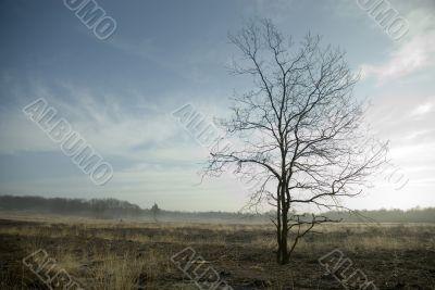 calm landscape in springtime