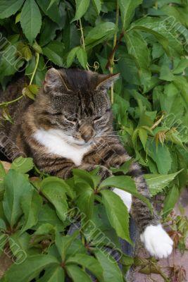 Cat plays hide and seek.