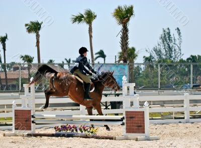 Equestrian Competition 2