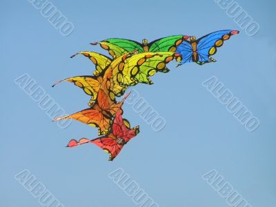 multiple butterfly kite