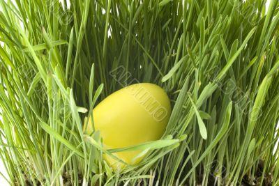 Yellow easter-egg