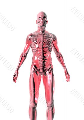 Anatomy_red