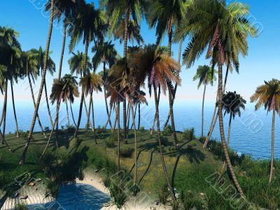 Palm lagoon