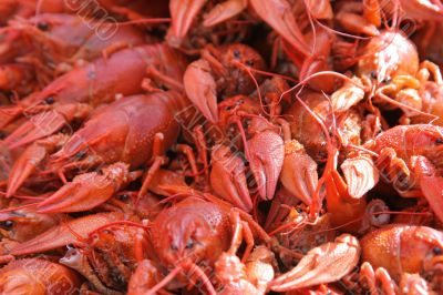 Red boiled crayfishes
