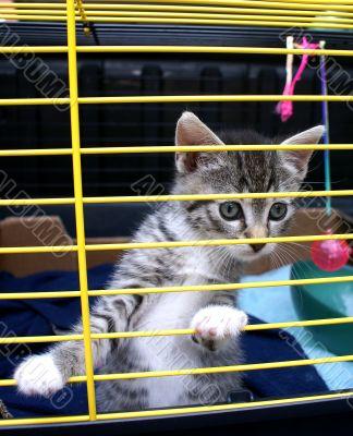 Kitten in cage.