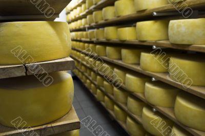 Cheese drying in shelf