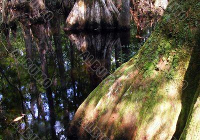 cypress base