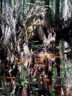 Complicated Swamp Scene