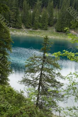 Conifer in front of blue lake