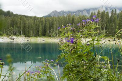 Geranium by lake in mountains