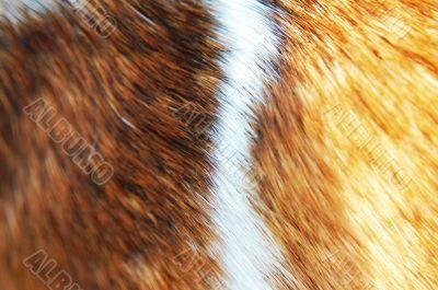 fur background texture