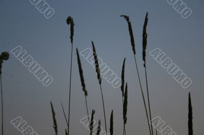 evening summer grass & insects