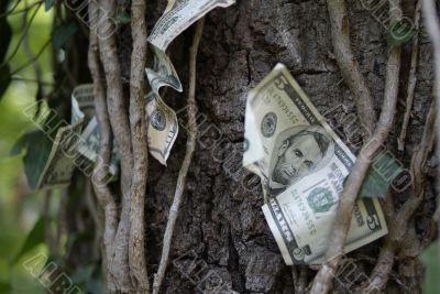 money on trees