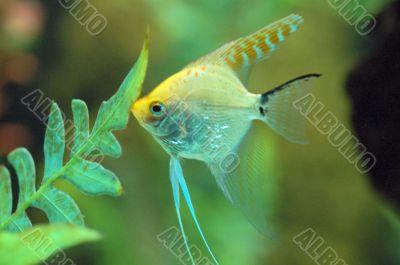 Fish feeding in Aquarium