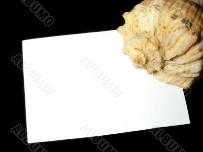 sheet with sea shell