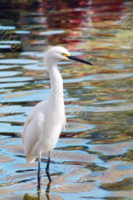 Migratory Crane Bird