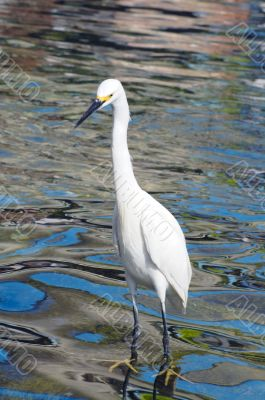 Crane Bird closeup