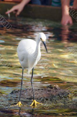 Watchful Crane Bird