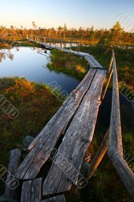 Tree Footbridge Through Swamp in Sunset