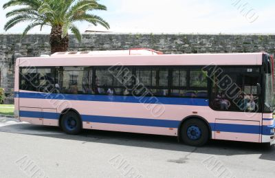 Pink and Blue Bus