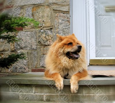 Dog Lounging on Steps