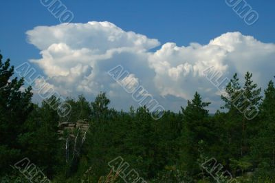Clouds and pines