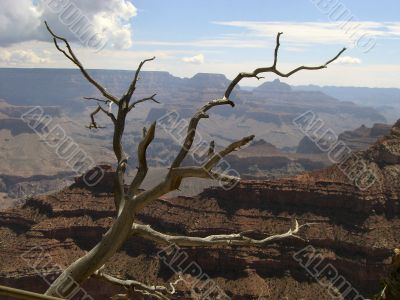 Lonelyness in Grand Canyon