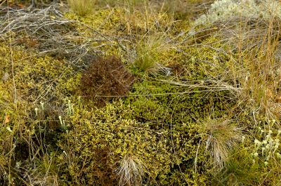 The invoice of a green wood moss