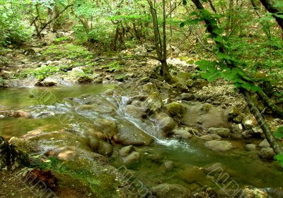 Stream in a wood in mountains