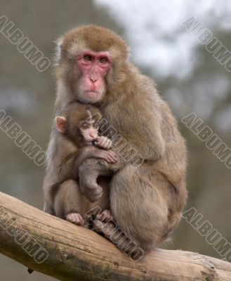 mother and her baby monkey