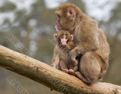 monkey with her cute baby