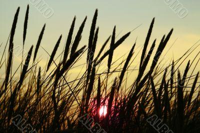 high summer grass