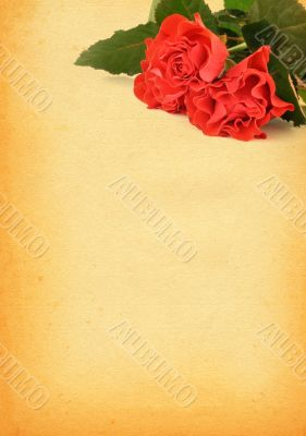 paper with rose motive