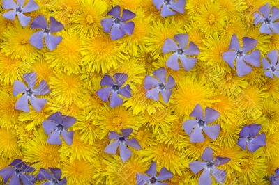 Yellow-blue spring background