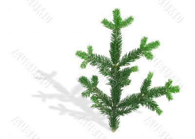 spruce twig with shadow