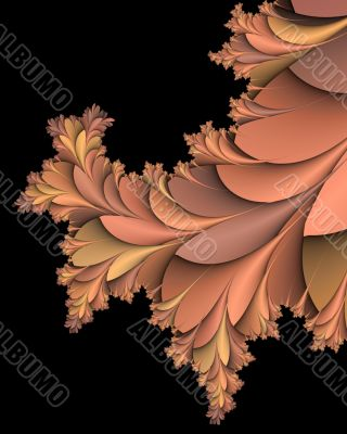 Shades of pink thorn bush
