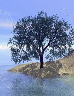 Sand dune tree with reflection