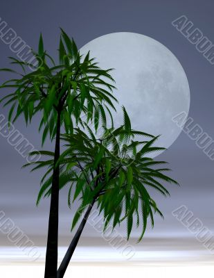 Lover`s moon in the tropics