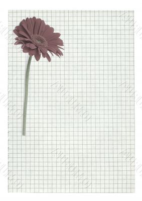 XXL size squared paper page with flower motive