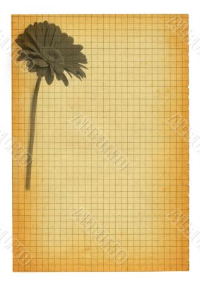 XXL size stained squared paper page with flower motif
