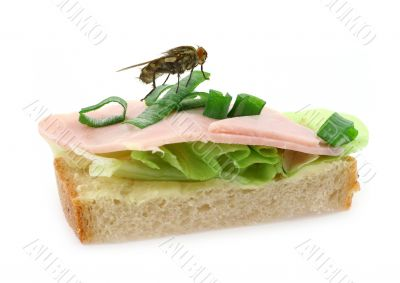 home fly sitting on delicious ham sandwich