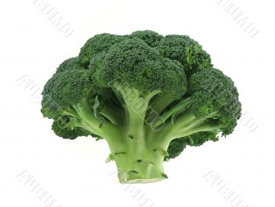 appetizing broccoli on pure white background